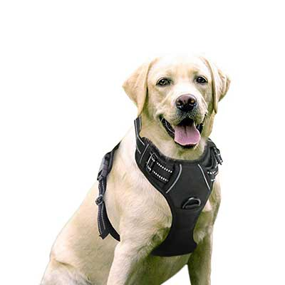 Rabbitgoo No-Pull Pet Harness Adjustable Outdoor Pet Vest for Small Medium Large Dogs
