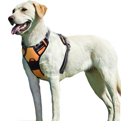 Eagloo Dog Harness No Pull Walking Breathable Pet Harness