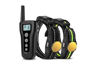 best dog training collars reviews